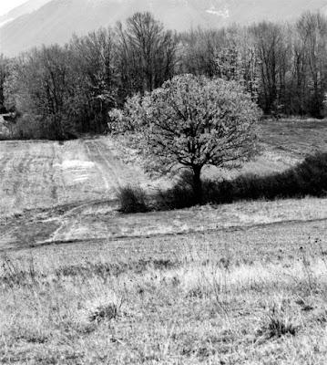 Piccoli campi incolti di _mdf