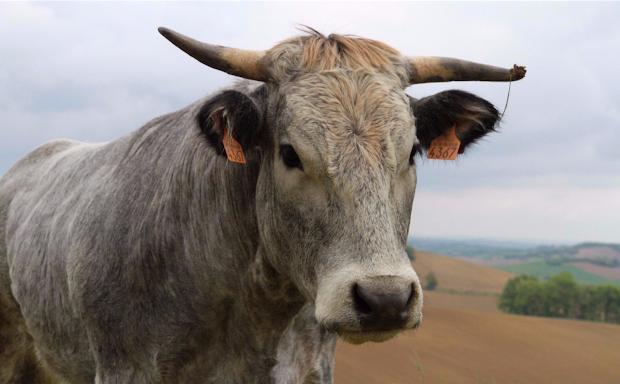 site web mobile créé par La ferme des 3 vaches