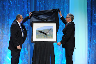 Photo: The unveiling. 2012 Ian McRae Award - an oil pastel of a Northern Sask eagle in flight.