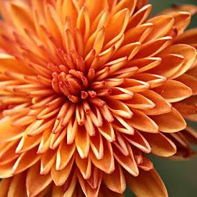by Su San - Flowers Single Flower