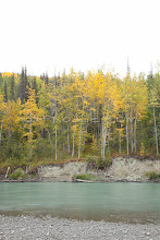 """Photo: Boreal forest near the Tashenshini River. The """"Tat"""" flows out of Yukon, CA, through British Columbia and empties into Glacier Bay National Park in Alaska, US."""