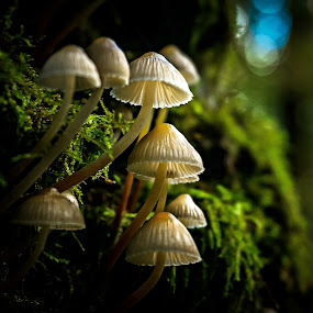 A blue light.  by Miguel Silva - Nature Up Close Mushrooms & Fungi ( morning light, blue, miguel silva, moss, forest, nature close up, viseu, portugal, fontelo, light, mushrooms,  )