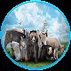 Download عالم الحيوان بالصوت والصورة For PC Windows and Mac