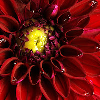 una rossa corona di
