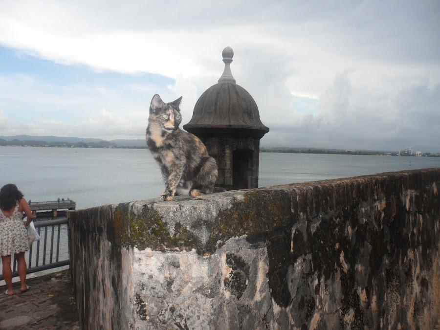 Stray cat In Puerto Rico by Carlito Rivera - Animals - Cats Portraits ( water, cats, puerto rico, el moro, color,  )