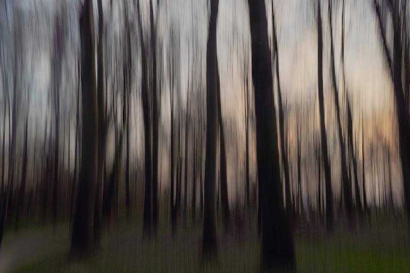 il bosco di alice di kaos