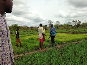 Photo: Photo by Devon Jenkins, Togo, March, 2014.