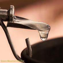 Photo: Drop of sap.