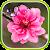 Oriental Live Wallpaper file APK Free for PC, smart TV Download