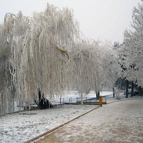 chiciura by Mihai Nita - City,  Street & Park  City Parks ( winter, iced trees, rime,  )