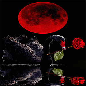 Red Rose Swan LWP apk