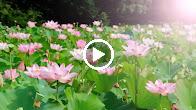 Nửa Đời Lầm Tin (Tone Nữ) – Nhạc Sống Organ