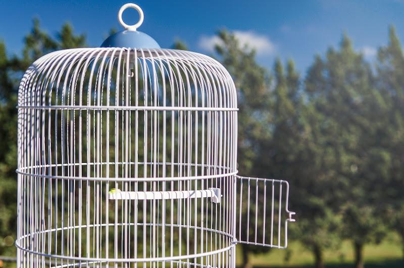 Liberi di Volare... di Franco Di Claudio