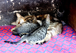 Photo: Day 110 - Mother Cat & Kittens Under a Bench in the Cloister of the Blue Mosque