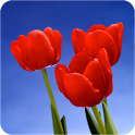 Tulip Wallpapers icon