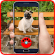 Pals Dogs Go! 2k18 Pocket Puppy Pets Download on Windows