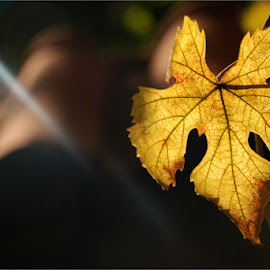 by Светослав Стойков - Nature Up Close Leaves & Grasses