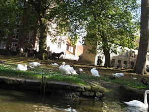 Photo: There were a tonne of ducks and swans. The swans are a symbol of the city and of the Minnewater (canalized lake). According to legend, in the late 15th century the people of Bruges had executed an administrator from the Austrian court, so Maximilian punished the city by decreeing they would always have to keep swans (on the coat of arms of the executed man).