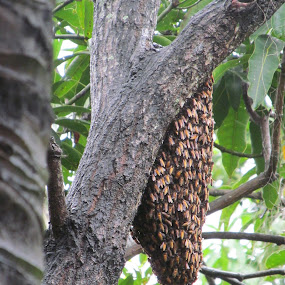 by Subhadeep Chatterjee - Nature Up Close Hives & Nests