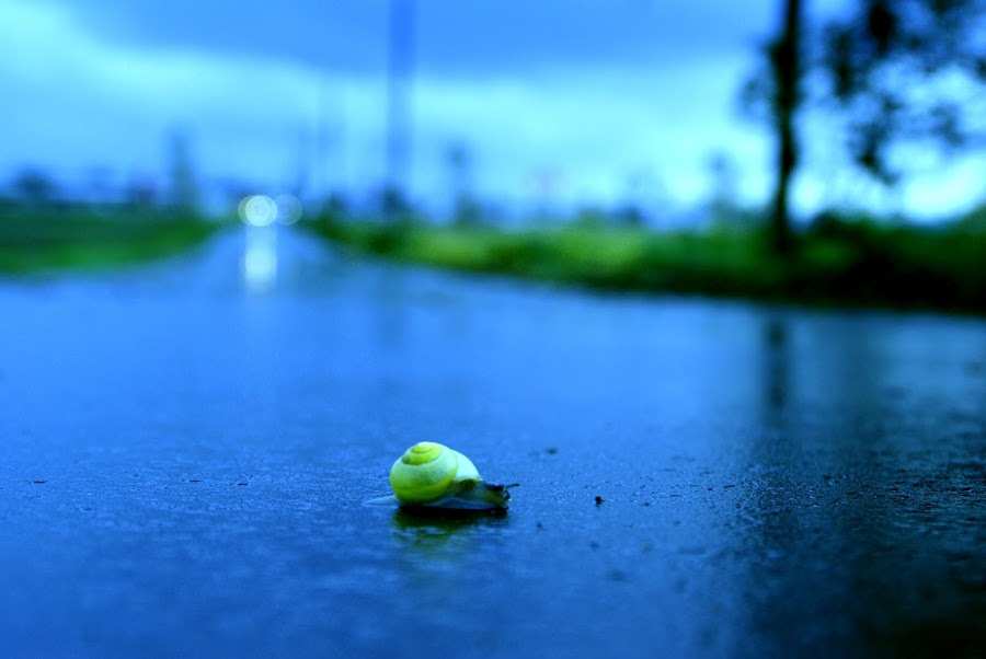 Snail On The Way by Martin Gustavo Nordahl Moxness - Animals Other ( snail on the way )