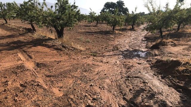 Los almendros sufrieron con el granizo que cayó.