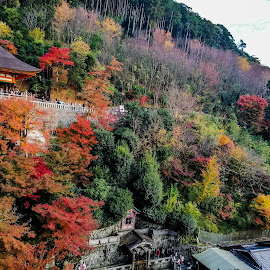 Autumn Leaves in Kyoto by Jurich Bitco - Landscapes Forests ( kyoto, japan, autumn colors, autumn leaves )