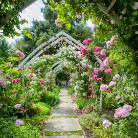 La Rochelle, jardin botanique by Annette Flottwell - City,  Street & Park  City Parks ( la rochelle, jardin botanique, parfum, lenstagger, roses )