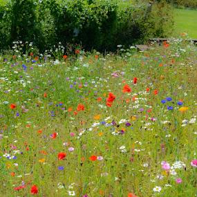 by Jo Darlington - Flowers Flowers in the Wild