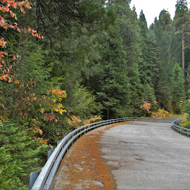 Autumn Road by Sarah Farber - Transportation Roads (  )