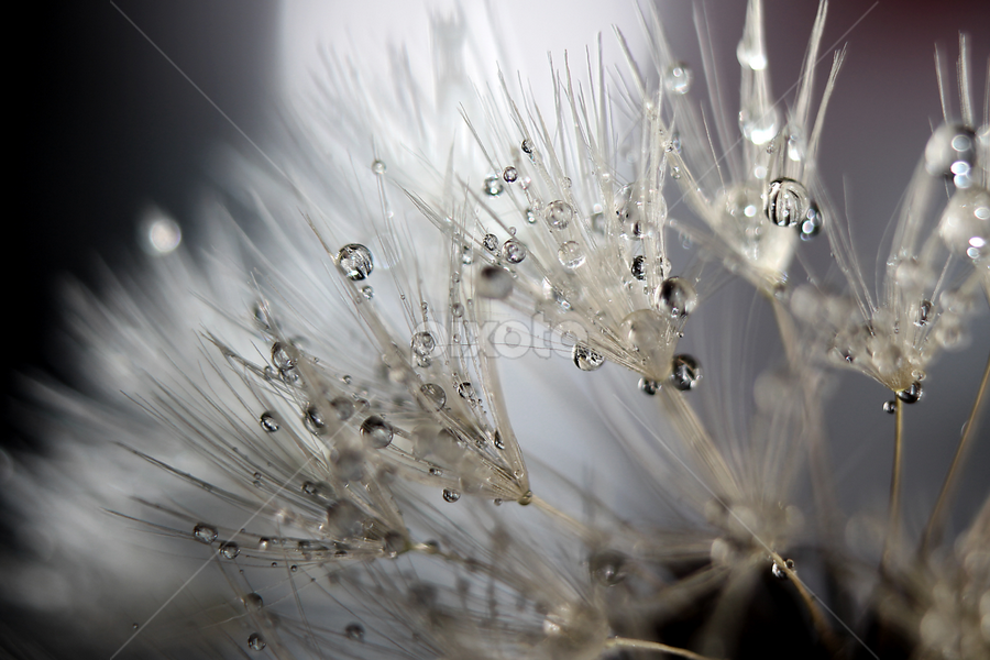 frescura by Maritte Lazcano - Nature Up Close Flowers - 2011-2013 ( circle, pwc79,  )
