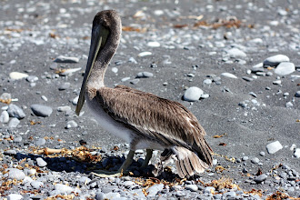 Photo: he got his leg and wing tangled up in a fishing line