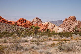 Photo: Red rocks and Joshua trees