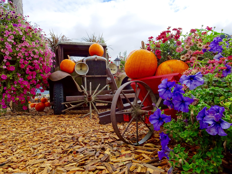 https://get.pxhere.com/photo/plant-flower-decoration-truck-harvest-produce-autumn-garden-season-flowers-display-pumpkins-flowering-plant-485885.jpg