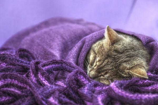 Purple cat di Giovanna_Tamponi