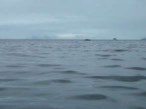 Photo: A Humpback Whale surfaces in Stephens Passage.