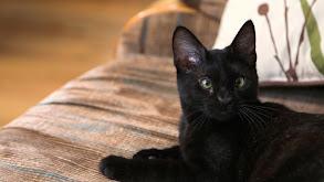Mojito Cat thumbnail