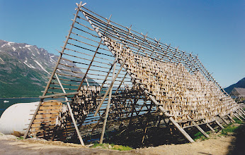 Photo: Drying fish in Norway