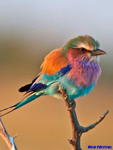 美しい鳥のアイデア