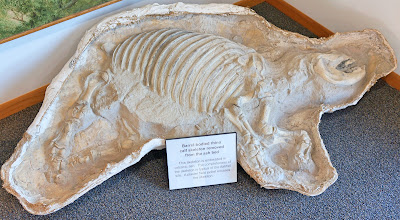 Photo: The Ashfall Fossil Beds are especially famous for fossils of mammals from the middle Miocene geologic epoch. The Ashfall Fossil Beds are stratigraphically part of the Serravallian-age Ogallala Group. (See next photo to read text.)