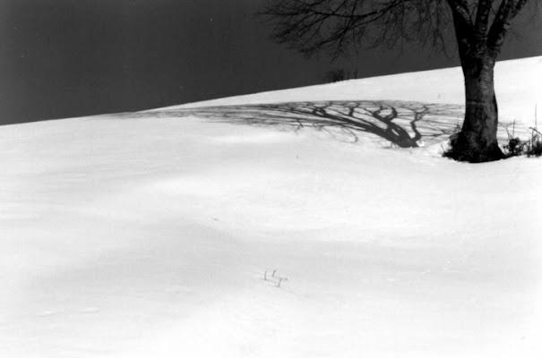 L'Ombra Sulla Neve di illyonair