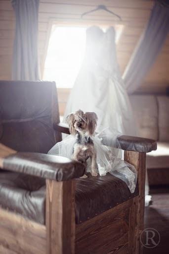 Свадебный фотограф Катя Рашкевич (KatyaRa). Фотография от 14.07.2015