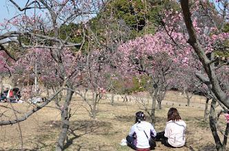 Photo: 荒山公園の梅林