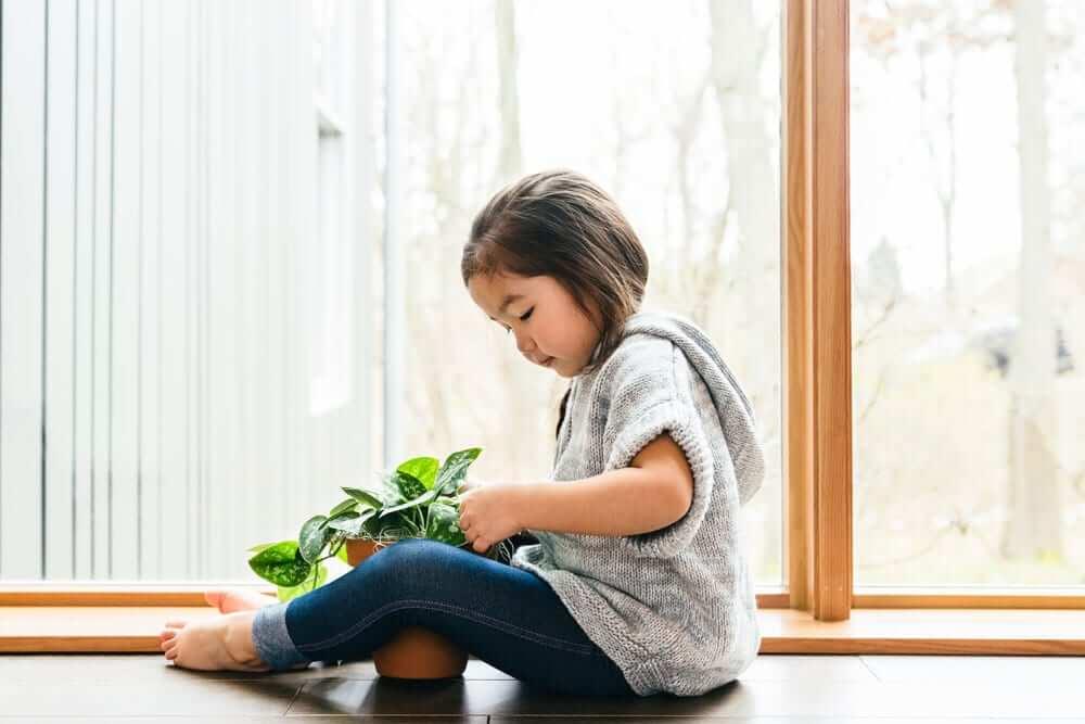 Los beneficios para la salud de las plantas de interior 1
