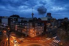 Rotterdams kruispunt in rode gloed bij avond met Euromast en zwerm vogels