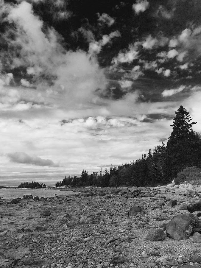 Brooklin shore by Mike Tapley - Landscapes Waterscapes ( maine, downeast, brooklin )