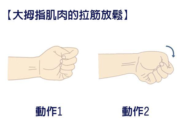【大拇指肌肉的拉筋放鬆】手放在身體的前方,讓大拇指朝向天花板。