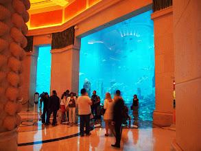 Photo: aquariumul e urias si aici