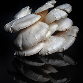 Zetas and reflections by Cristobal Garciaferro Rubio - Digital Art Things ( reflection, fungi, white, zeta, white fungi )