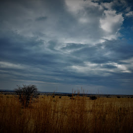 by Orpa Wessels - Landscapes Prairies, Meadows & Fields