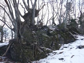 岩の上に木々が立つ